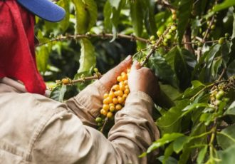 Colombian man working on a coffee plantation