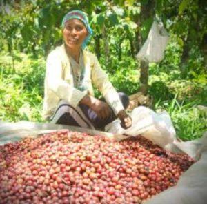 Coffee plantation worker